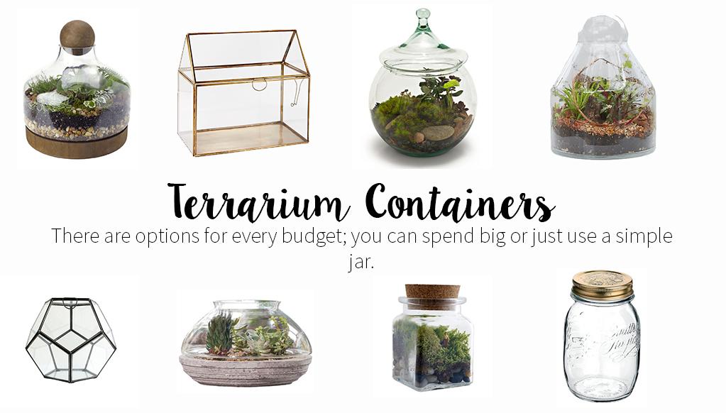 Choosing Terrarium Containers